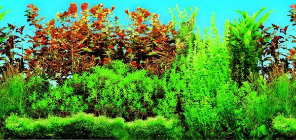 Aquarien-Rückwand, beidseitig, Süßwasser, 120 × 50 cm