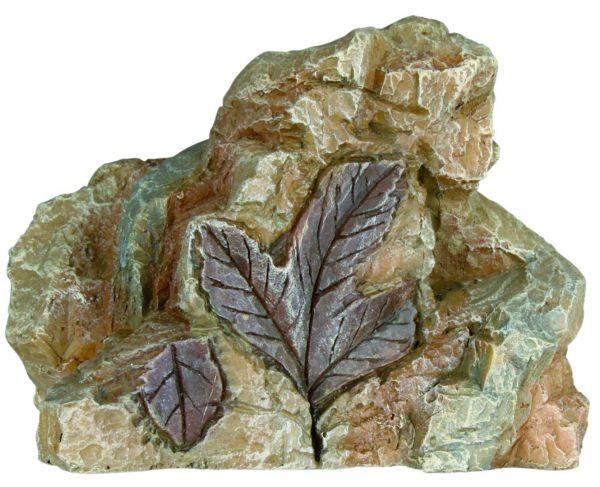 6 Fossilien 10 cm
