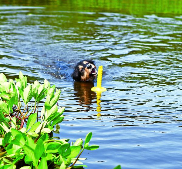 Dog Activity Mot-Aqua 29 cm