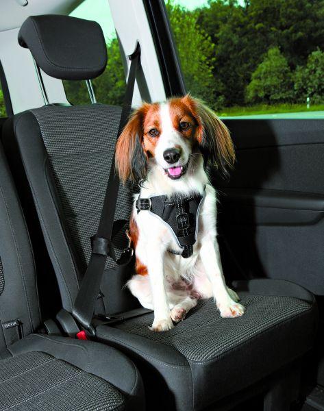 Auto-Geschirr Dog Protect S-M: 40-55 cm/20 mm, schwarz